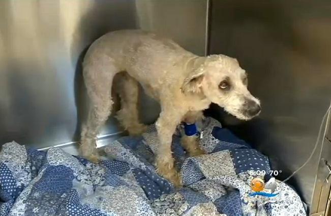 Ruby no hospital veterinário. (Foto: Reprodução / CBS Miami)