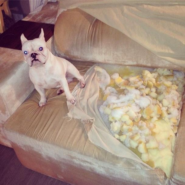 Bóris destruiu o sofá. (Foto: Reprodução / Instagram)