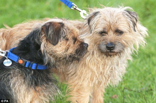 LUcky nasceu cego e seu pai Scruff é seu cão-guia. (Foto: Reprodução / Daily Mail)