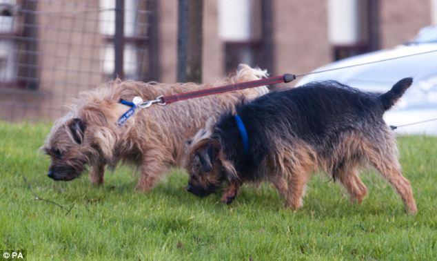 Scruff começou a ajudar o filho cego por instinto. (Foto: Reprodução / Daily Mail)