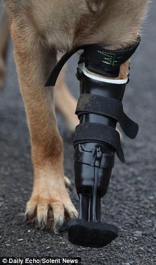 A prótese foi feita especialmente para Shadow. (Foto: Reprodução / Daily Mail)
