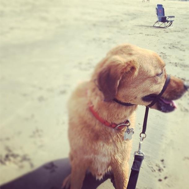 Tom Delonge se diverte com travessura de seu cachorro. (Foto: Reprodução / Instagram)
