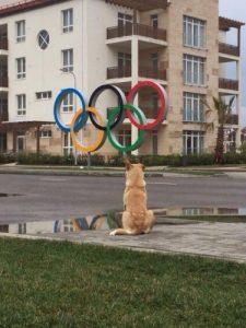 Cachorro de rua sentado em frente ao símbolo dos Jogos Olímpicos em Sochi. Foto por Alicia Kendig, Twitter.