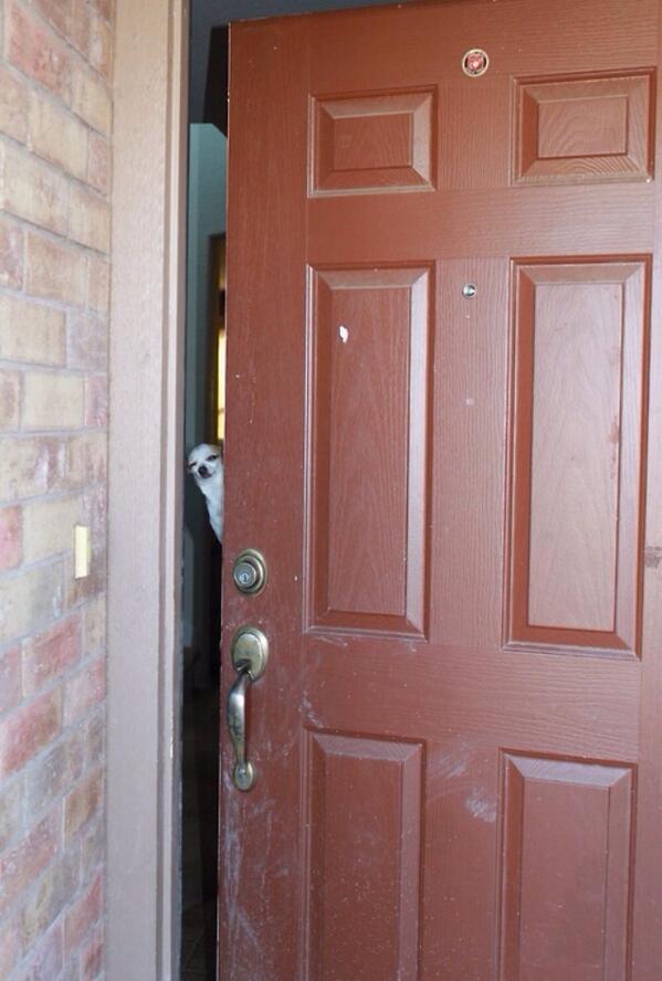 cachorro-porta-humor