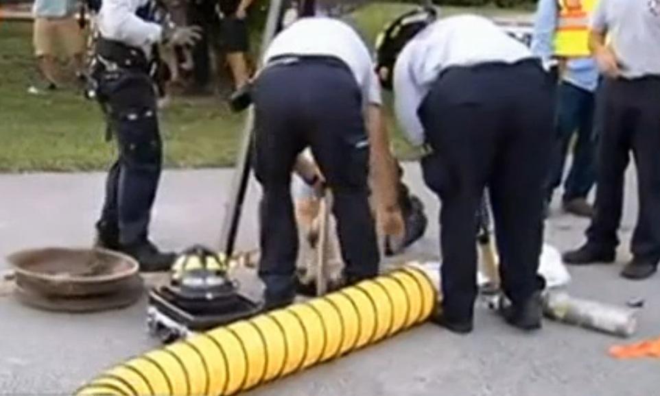 Bombeiros tentando resgatar o cão. (Foto: Reprodução / NBC Miami)