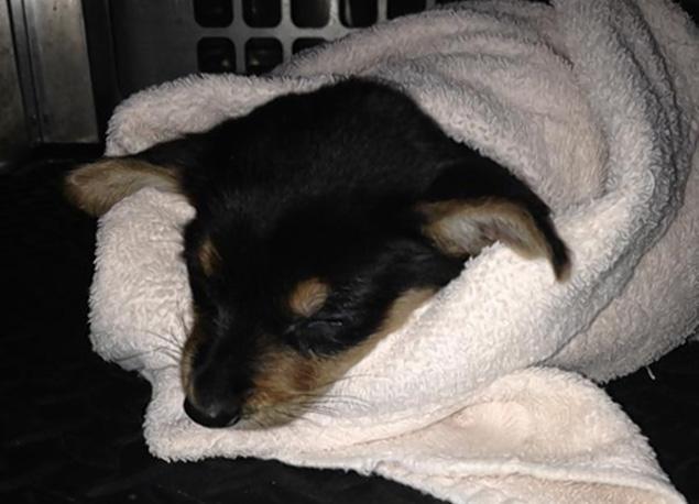 Gizmo teve molho picante derramado em seu rosto, mas se recupera bem. (Foto: Reprodução / NY Dailly News)