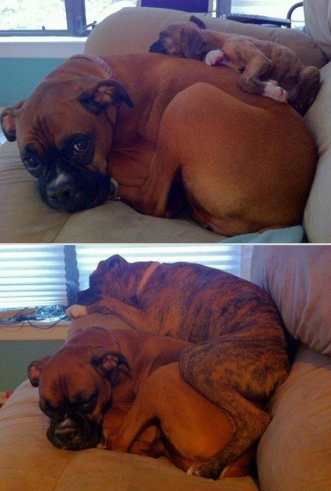 cachorros-antes-depois-tempo (10)