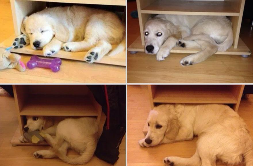 cachorros-antes-depois-tempo (14)