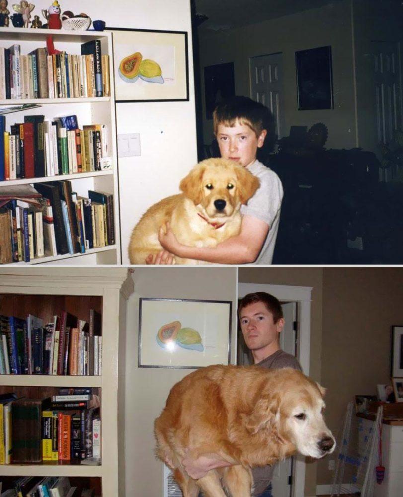 cachorros-antes-depois-tempo (15)