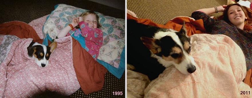 cachorros-antes-depois-tempo (16)
