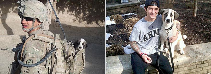 cachorros-antes-depois-tempo (4)