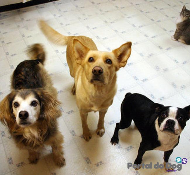 cachorros-embaixo-mesa-comida-01