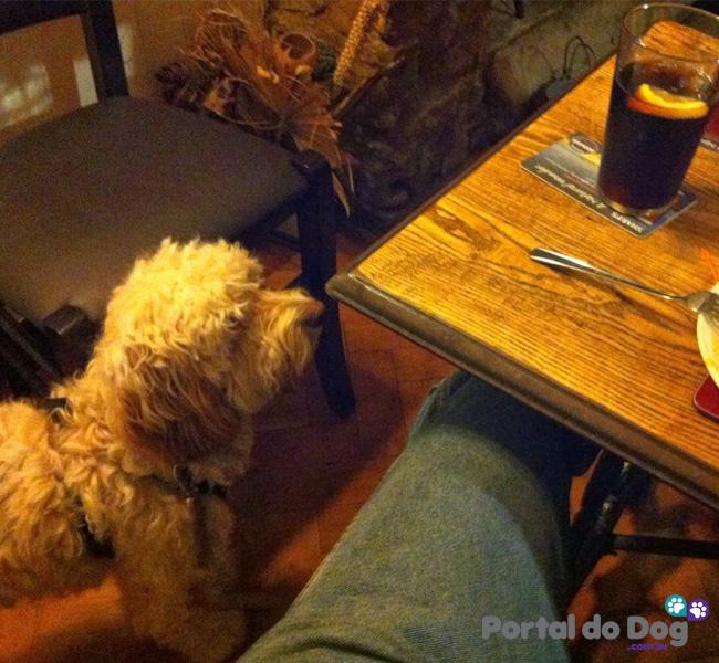 cachorros-embaixo-mesa-comida-04