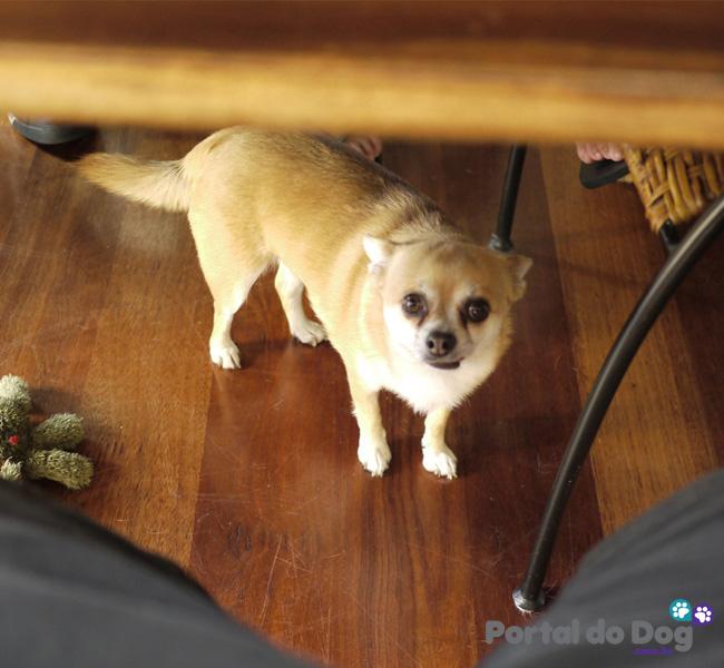cachorros-embaixo-mesa-comida-06