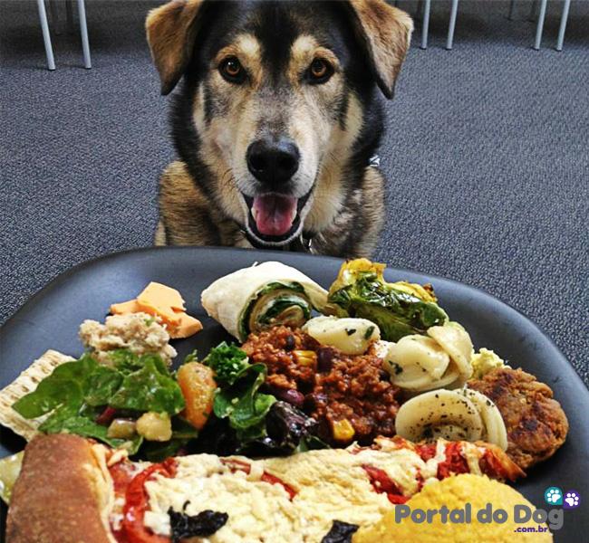 cachorros-embaixo-mesa-comida-08