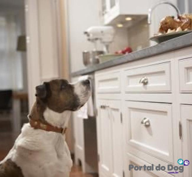 cachorros-embaixo-mesa-comida-09