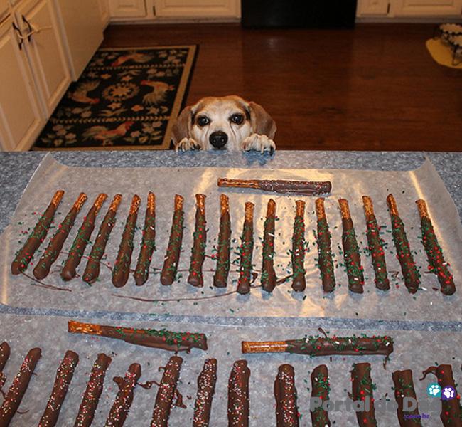 cachorros-embaixo-mesa-comida-13