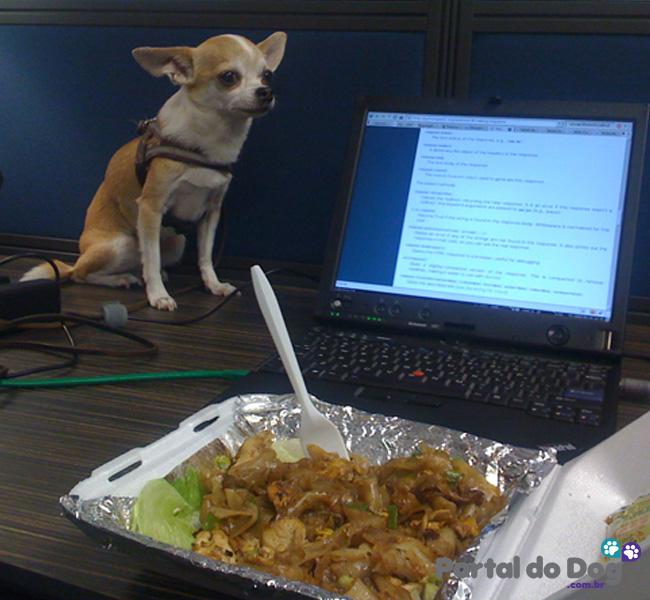cachorros-embaixo-mesa-comida-14