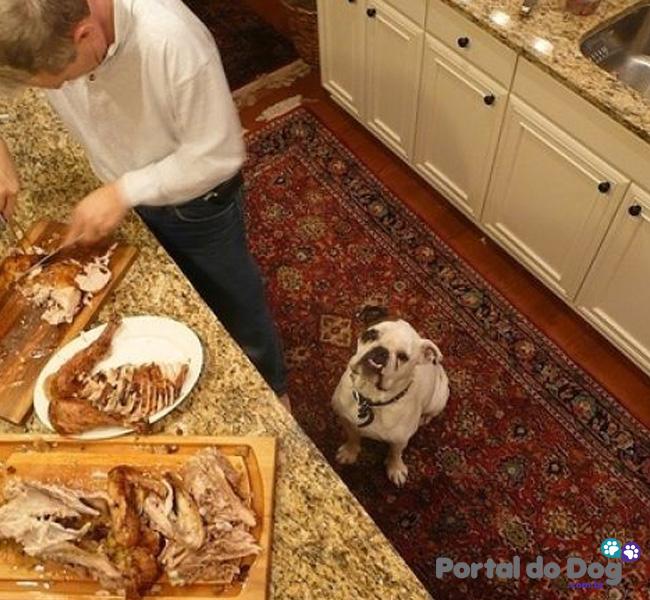 cachorros-embaixo-mesa-comida-16