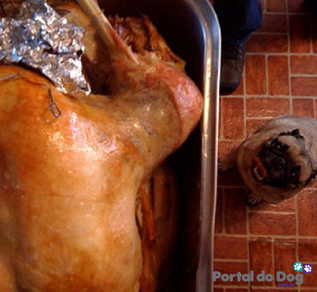 cachorros-embaixo-mesa-comida-22