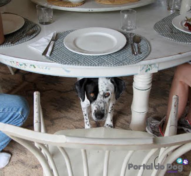 cachorros-embaixo-mesa-comida-25