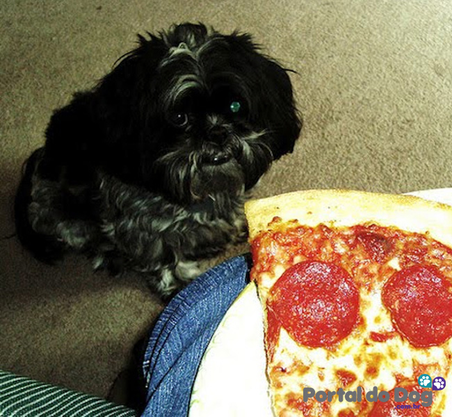 cachorros-embaixo-mesa-comida-27