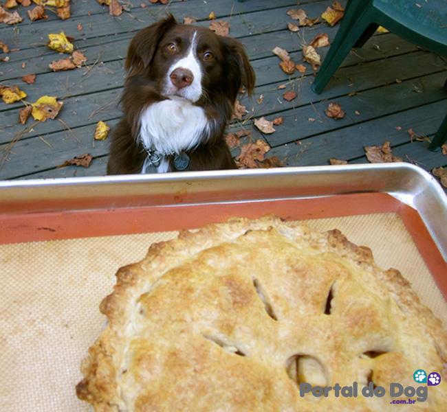 cachorros-embaixo-mesa-comida-28