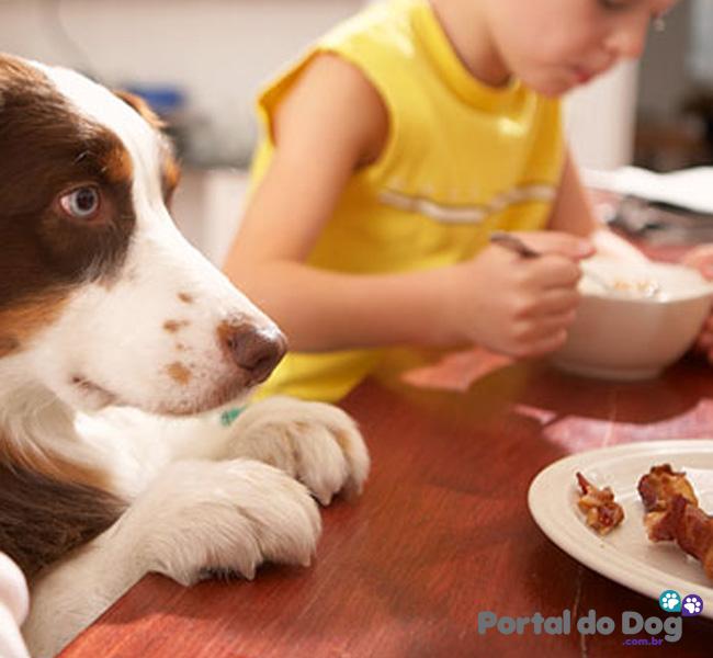 cachorros-embaixo-mesa-comida-29
