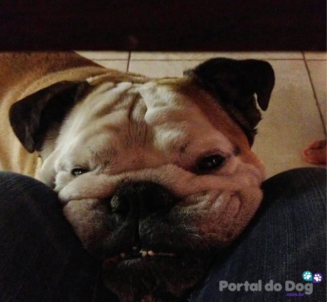 cachorros-embaixo-mesa-comida-31