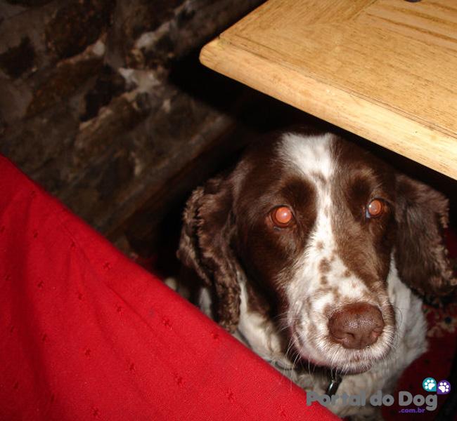 cachorros-embaixo-mesa-comida-32