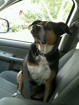 cachorros-indo-veterinario-01
