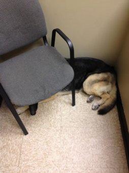 cachorros-indo-veterinario-010