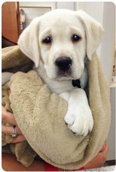 cachorros-indo-veterinario-013