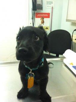 cachorros-indo-veterinario-014