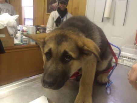 cachorros-indo-veterinario-016