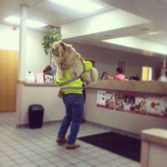 cachorros-indo-veterinario-02