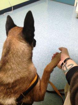 cachorros-indo-veterinario-08