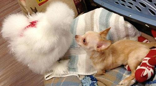 Foto: Reprodução / Duluth Animal Hospital