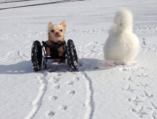 Roo e Penny são amigos inseparáveis. Foto: Reprodução / Duluth Animal Hospital