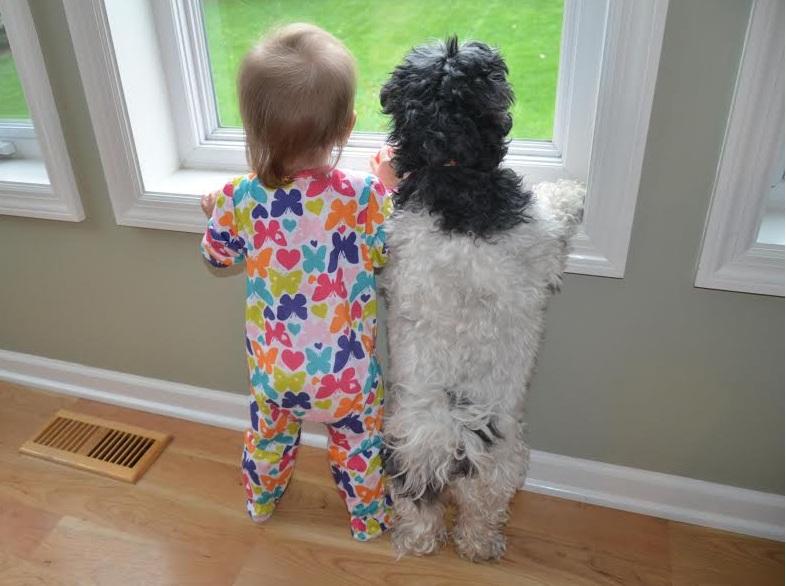 Estudo indica que as crianças preferem os cachorros. (Foto: Reprodução / Google)