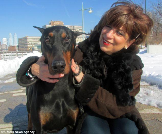 O doberman Troy detectou o câncer de mama em sua tutora. (Foto: Reprodução / Daily Mail)