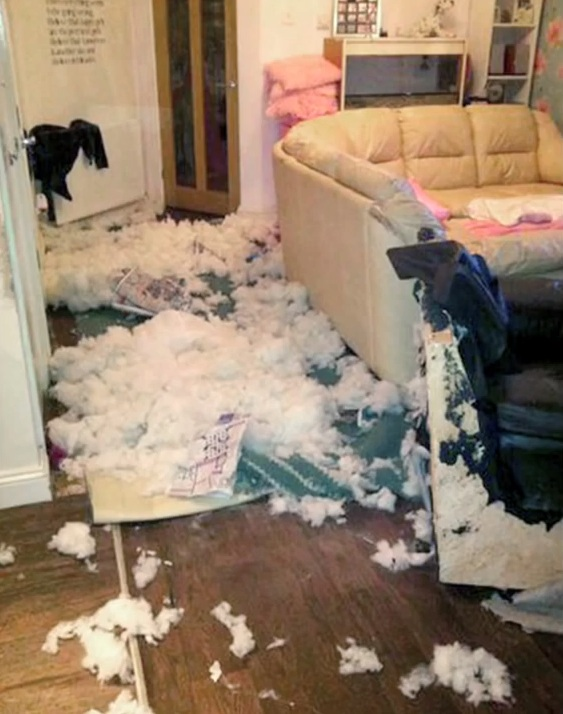 O cão já destruiu 14 sofás. (Foto: Reprodução / Barcroft TV)