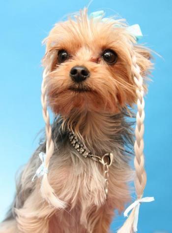 Extensão para cães. (Foto: Divulgação / Wiggles Dog Wigs)