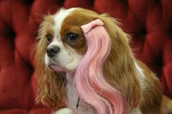 Mecha rosa. (Foto: Divulgação / Wiggles Dog Wigs)