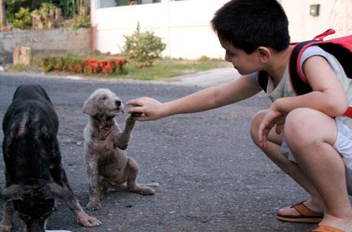 Somente o cãozinho branco aceita o contato de Ken. Foto: Reprodução / imgur