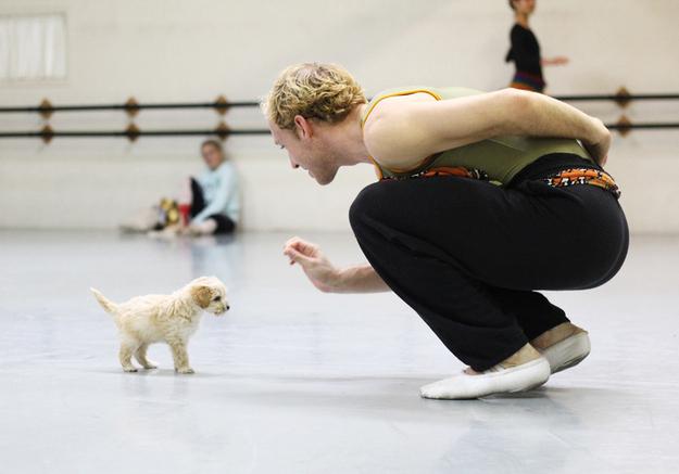 gaston-cachorro-grupo=ballet-san-diego-01