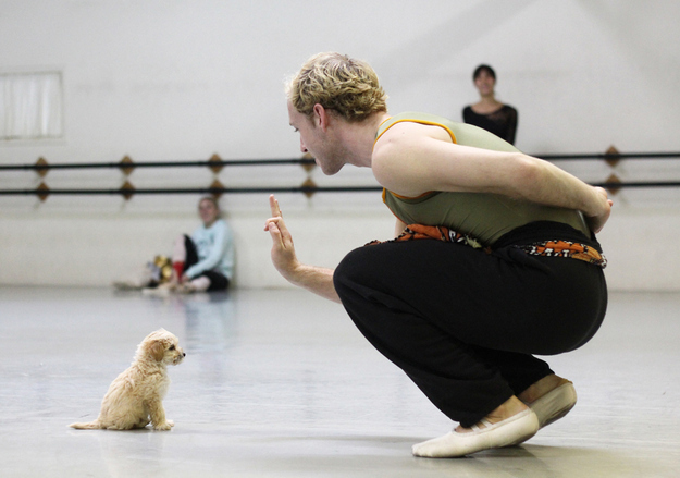 gaston-cachorro-grupo=ballet-san-diego-02