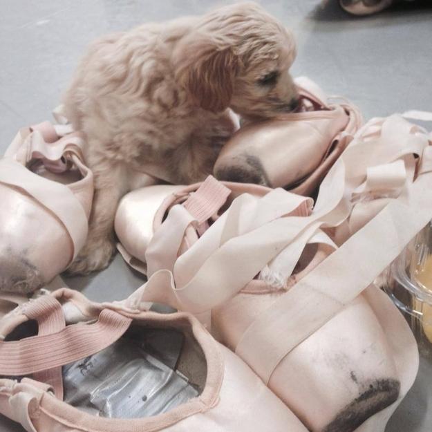 gaston-cachorro-grupo=ballet-san-diego-04