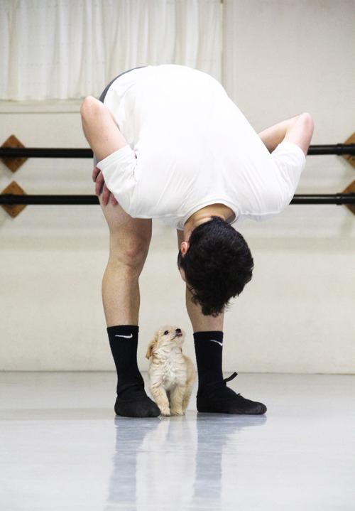 gaston-cachorro-grupo=ballet-san-diego-05