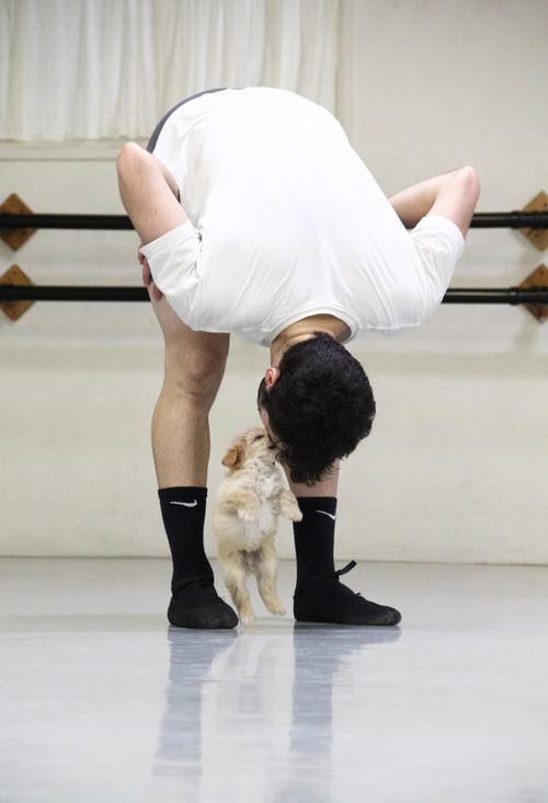 gaston-cachorro-grupo=ballet-san-diego-06